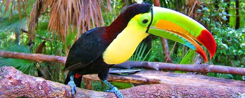Belize-Birding
